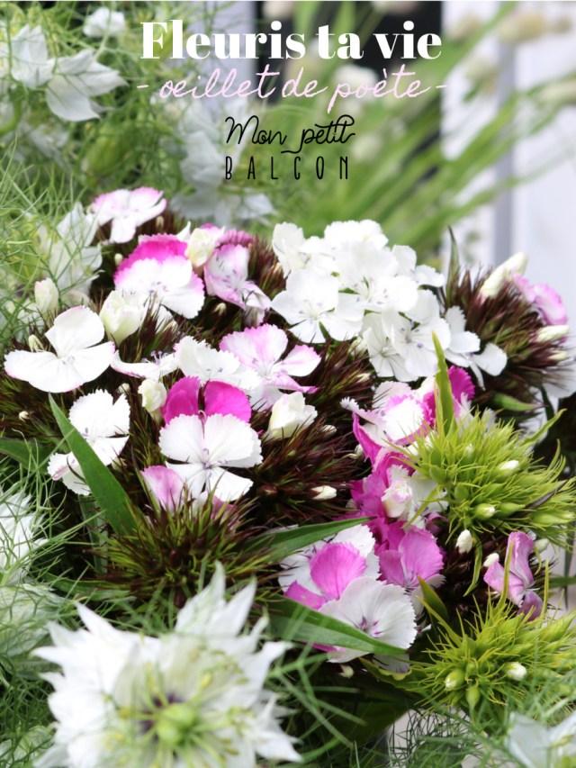 fleuris ta vie - oeillet de poète : conseille de Sophie, fleuriste éco-responsable. Oeillet de poète blanc rose vive et rose claire en bouquet avec des bleuets blancs