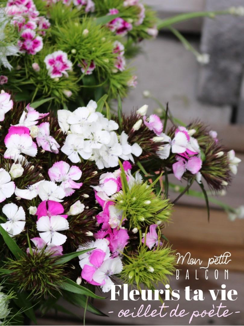 fleurs_saison_oeillet_poete_05
