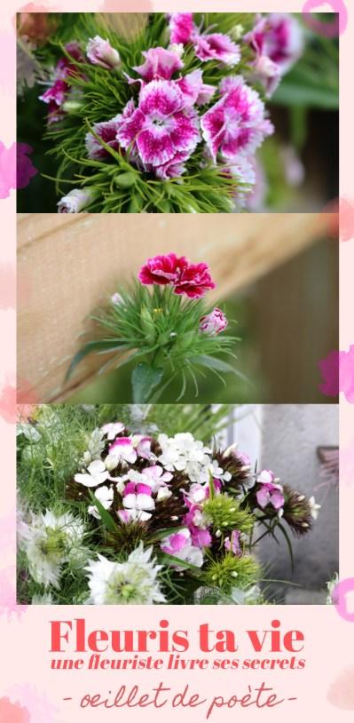 fleuris ta vie - oeillet de poète : conseille de Sophie, fleuriste éco-responsable. Oeillet de poète rose vive et rose claire en bouquet