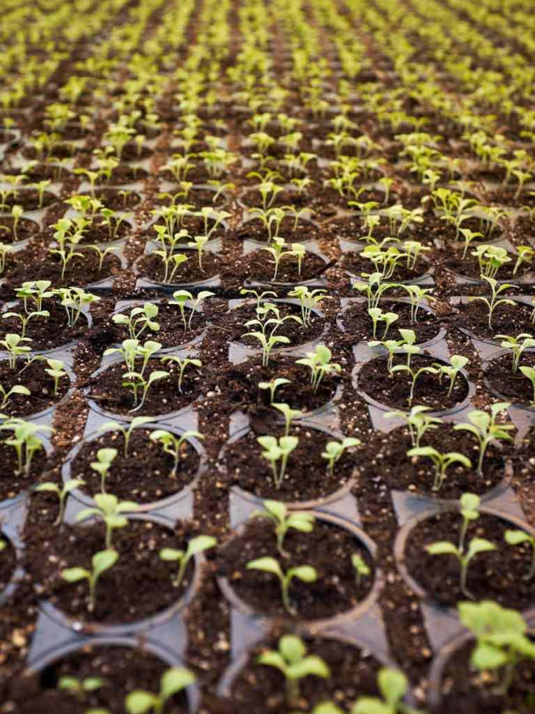 conseil jardinage urbaine : quelle exposition pour la culture des légumes feuilles au potager sur balcon