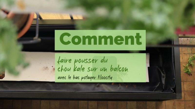 Faire pousser du chou kale dans un potager sur balcon avec Noocity