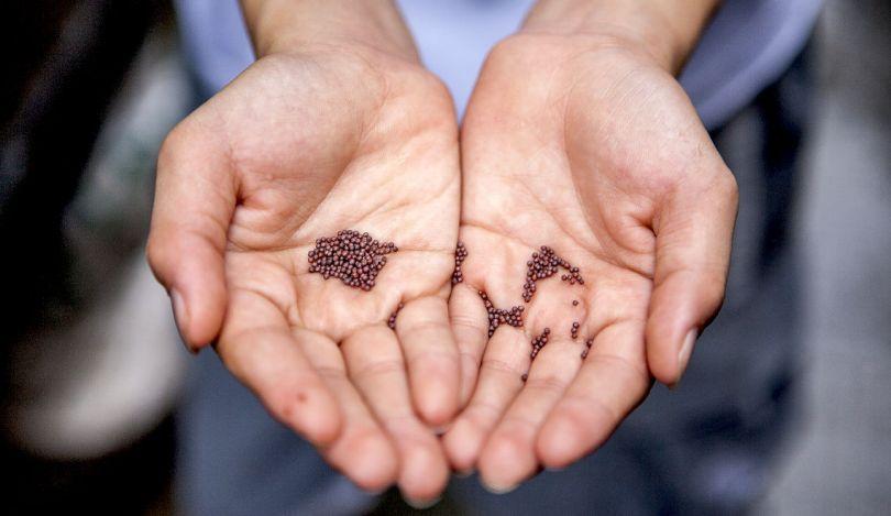 choisir et apprendre à semer les graines pour un potager de balcon