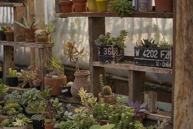 plusieurs plantes en pot de taille différentes au rebord d'une fenêtre sans soleil direct.