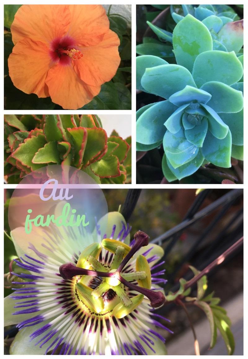 hibiscus, succulente et joubarbe, passiflore en fleur