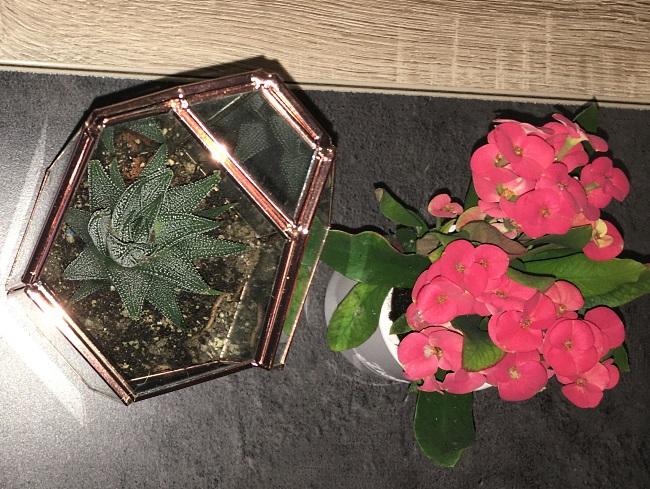 euphorbe et succulente