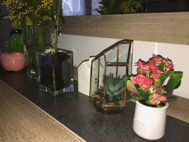plantes salons euphorbe succulente dendrobium mimosa aussi