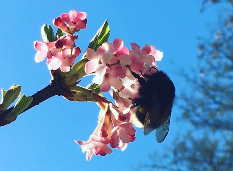 merci pour le printemps