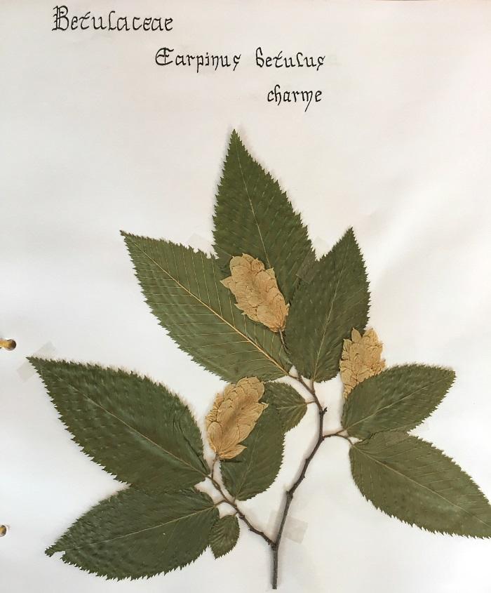 herbier charme