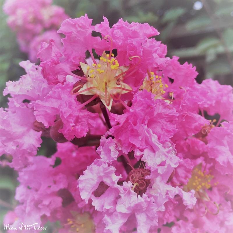 Fleur de papier crépon