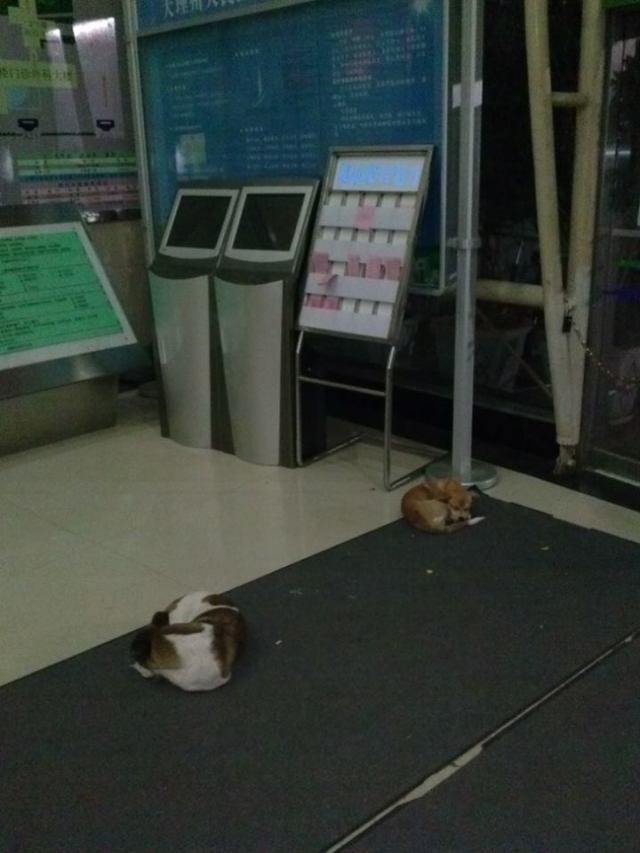 Dogs sleeping in the hospital