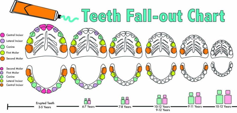 orden caída dientes leche
