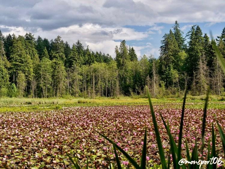 Stanley Park pond