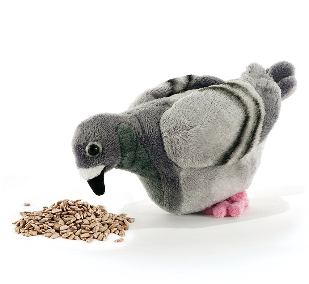 piccione-truidy-pelcuhes_