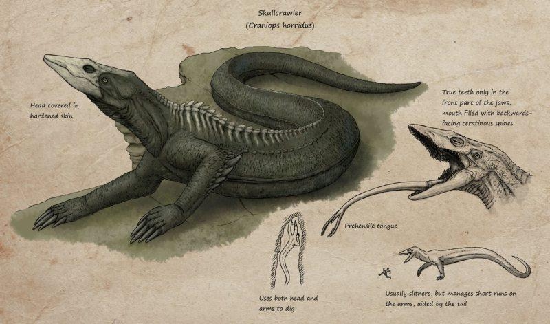 Anatomia dello Skullcrawler