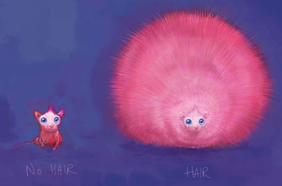 Disegno della Puffola Pigmea
