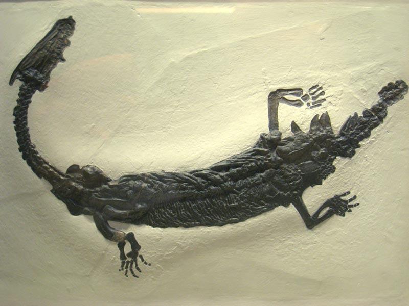 Lariosauro bestiario italia Lombardia