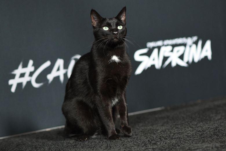Salem gatto di Sabrina