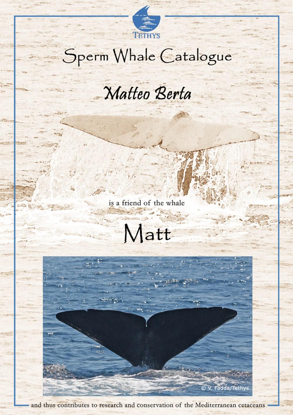 cert_Matt_Matteo Berta.jpg