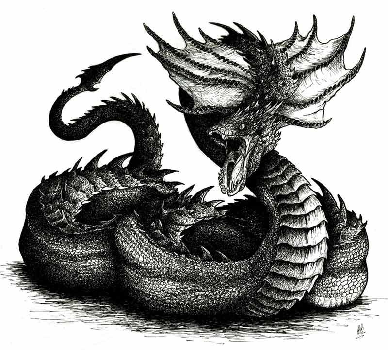 Serpente regolo della fortezza Toscana