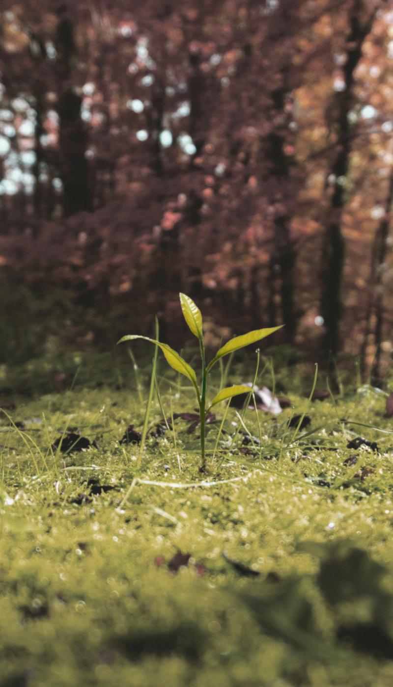 Germoglio pianta carnivora parallax