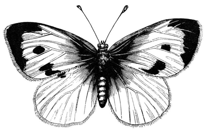 Farfalla favola Chuang-tzu