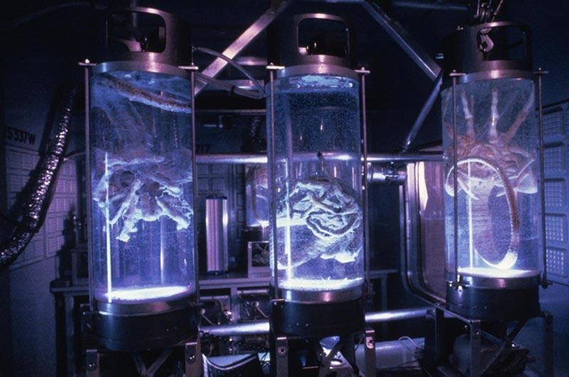 Aliens facehugger morti nei tubi