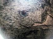 Águila - Detalle