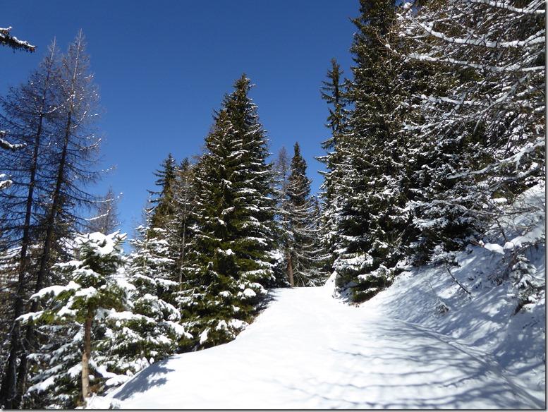 piste et forêt