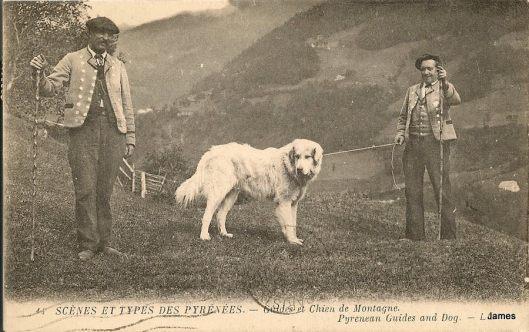 Guides et chien de montagne