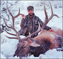336 bull elk