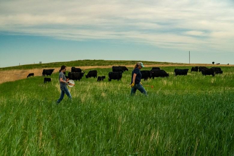 Happy Steer Ranch Montana regenerative agriculture