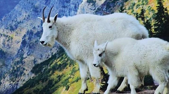 MSN 345 - Wild Montana: Photographer Donald M. Jones