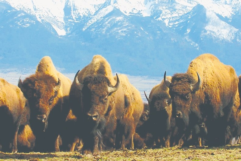 Montana's National Bison Range
