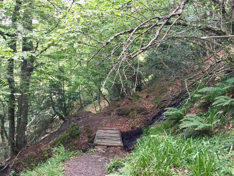 Vista atrás de la pasarela de madera sobre O Rego da Rogueira.