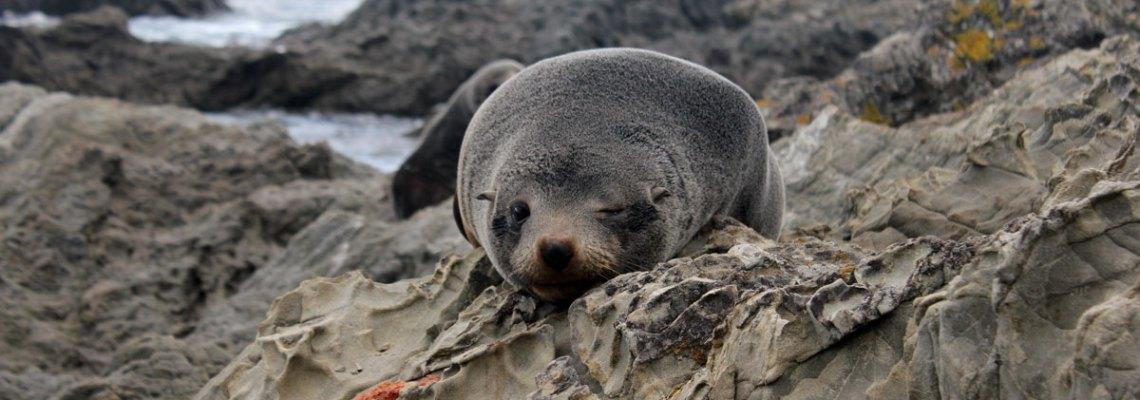 5 rincones increíbles de Nueva Zelanda para 5 actividades de aventura y naturaleza (que te harán alucinar)