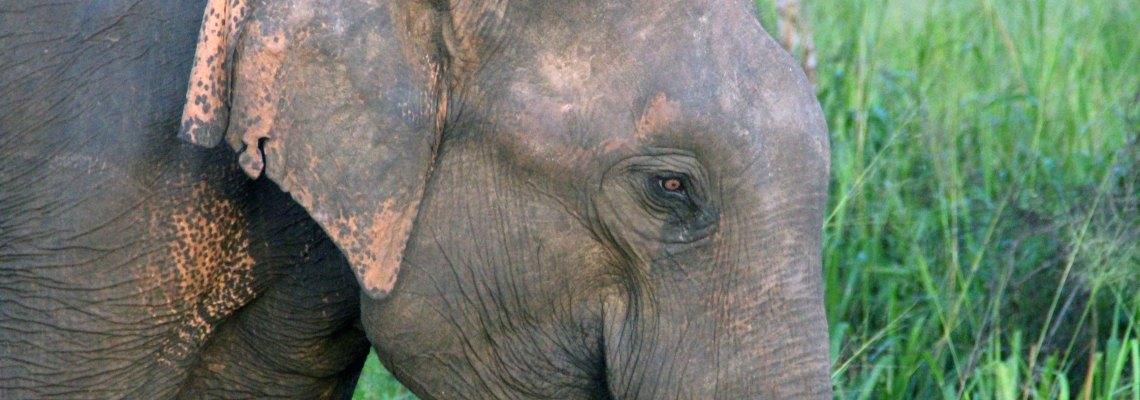 30 consejos mochileros para tu viaje a Sri Lanka (y que no encontrarás en la Lonely Planet)