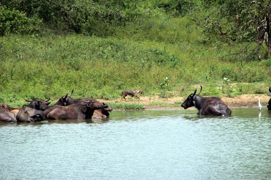 safari-sri-lanka