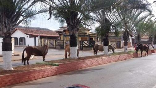 Ação do município diminui número de equinos soltos nas ruas