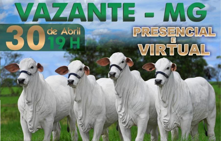 Leilão de gado em Vazante será transmitido pela internet; evento está marcado para esta quinta-feira (30)