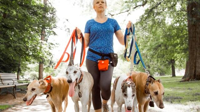 Dog Walker | Montclair Film