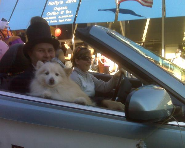 Halloween 2009 - Dog Mayor