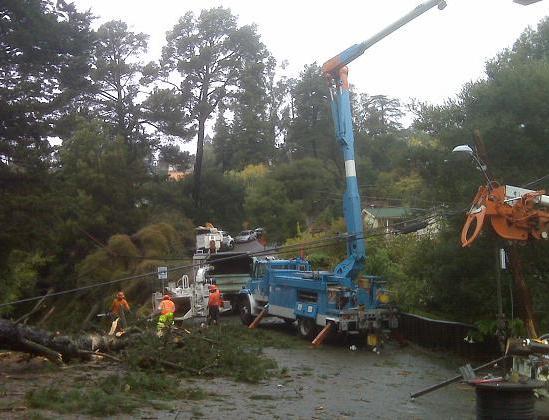 Merriewood - Tree Cleanup