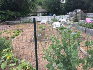 Representing part of our food system, the Farmacy Garden (210 Pepper Street, Christiansburg), prescribes fresh produce and teaching gardening skills.