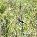 laguna-galarza-ibera-cardenal