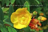 xp3-dot-us_DSC_4433 yellow blossom