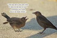 xp3-dot-us_DSC_4869 stone into bread, 2 birds