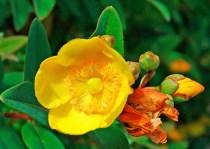 xp3-dot-us_DSC_4433 yellow blossom (1)