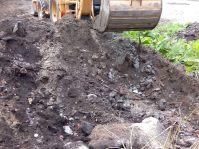 Escombro agochado na nosa parcela por algún desalmado que non aprecia o monte.