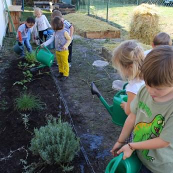 potager montessori arroser plantes