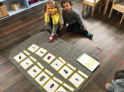 montessori international bordeaux insectes 11